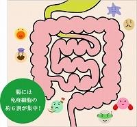 腸には免疫細胞の6割が集中